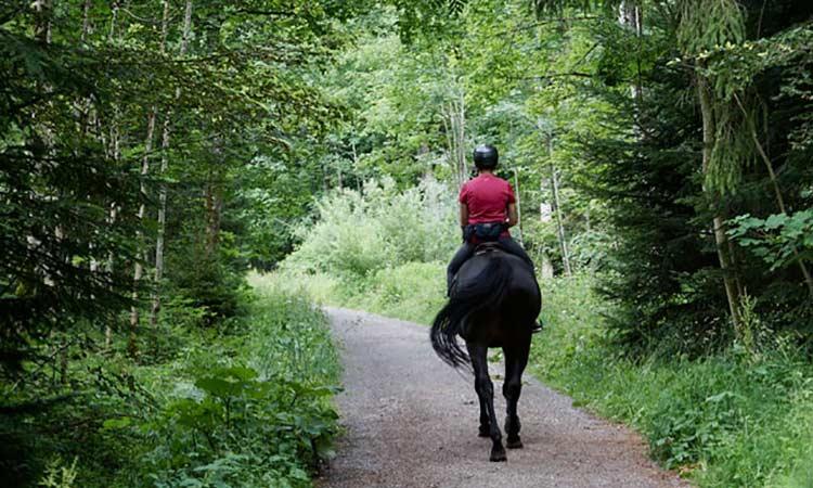 Loch-Ness-Lodge-Hotel-Leisure-Activities-Pony-Trekking